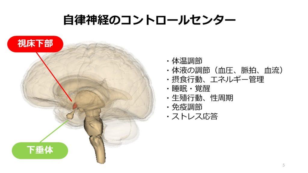 視床下部と下垂体